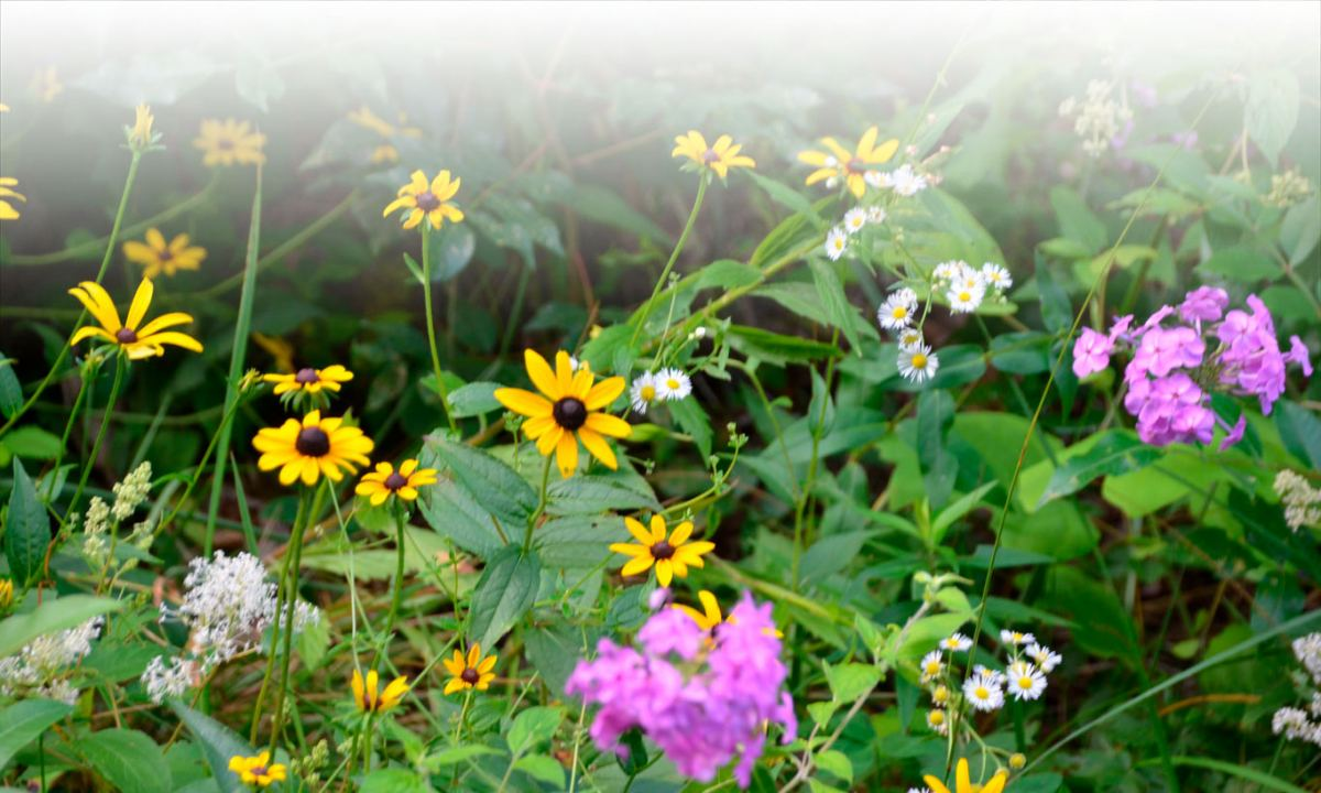 group of colorful wildflowers
