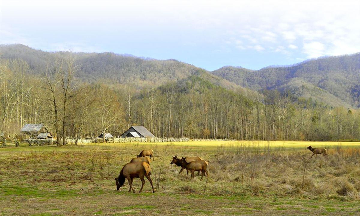 Elk in field near mountain farm